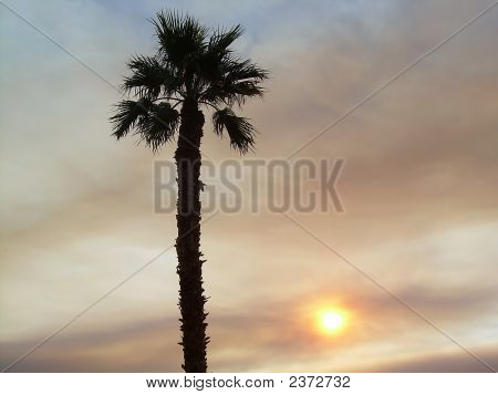 Palm Tree Silouette