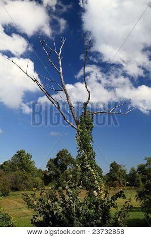 Dead Wood Tree