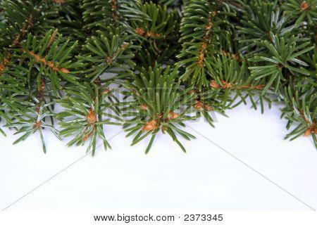 Christmas Pine Frame