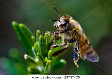 bee in green bushes
