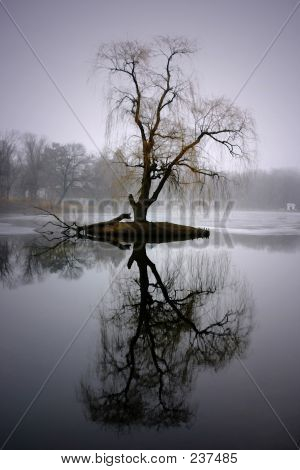 Tree Tall Reflection