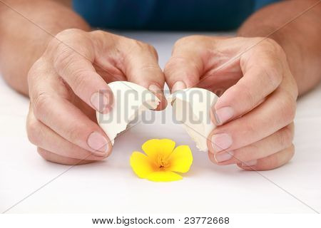 Yellow Flower In An Eggshell