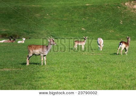 group of deer on natural background.