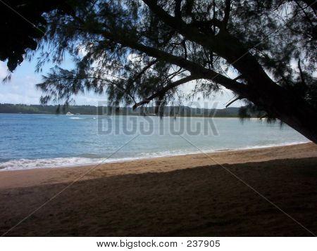 Shade On The Beach