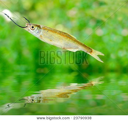 Small fish on the fishing hook over a water level.