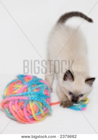Kitten Playing With Ball Of Colorful Yarn