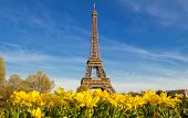 Spring In Paris, France, The Eiffel Tower With A Vibrant Blue Spring Sky With Yellow Flowers In Fore poster