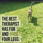 Inspirational Motivational Quote the Best Therapist Has Fur And Four Legs On Running Cat Backgroun poster