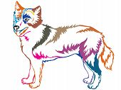 Colorful Contour Decorative Portrait Of Standing In Profile Yakutian Laika, Vector Isolated Illustra poster