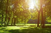 Summer Landscape - Colorful Summer City Park With Deciduous Green Trees In Sunny Weather. Summer Par poster