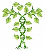 foto of double helix  - DNA plant concept - JPG