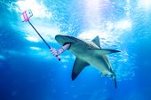 Underwater White Shark Taking A Selfie Picture With A Human Arm Holding A Selfie Stick. Undersea Mar poster