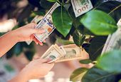 Money Tree With Dollar Bills Growing On Leaves. Hand Collect Money From Money Tree poster