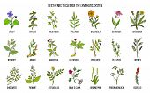 Best Medicinal Herbs To Cleance The Lymphatic System. Hand Drawn Vector Set Of Medicinal Plants poster