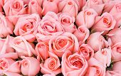 picture of pink rose  - big bunch of multiple pink roses of a bride on a wedding from top of bridal photos series - JPG