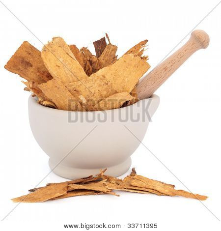 Astragalus root herb used in traditional chinese herbal medicine in a stone mortar with pestle over white background. Used to speed healing and treat diabetes. Zhi huang qui. Astragali radix.