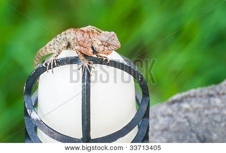 Dragon Rest At Lamplight
