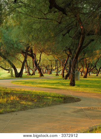 Park Walkway At Sunset