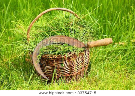 Fresh grass in basket and sickle. Scene from rural garden in summer.