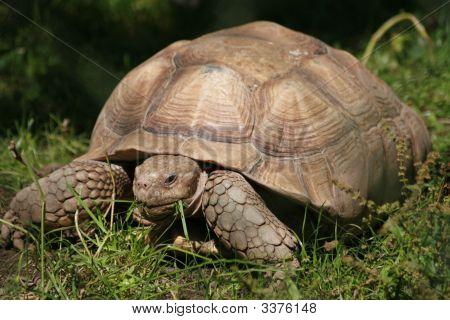 Turtle In Dublin