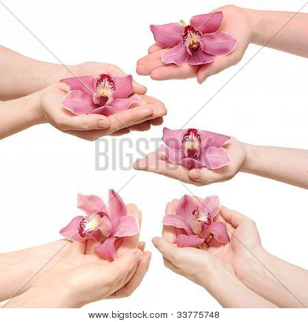 Hands and orchid over isolated white background.each one is a separate picture