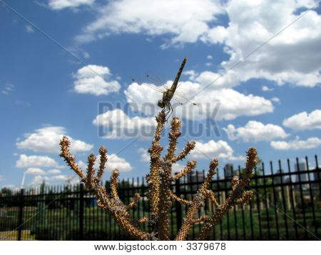 Dragonfly Standing Upright Against Blue Sky