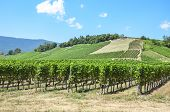 Rows Of Green Vineyards On The Hill Close To Neuchatel Lake In Switzerland. Photographed On A Sunny  poster
