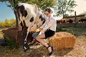 image of milkmaid  - Young woman milking cow on farm - JPG