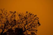 Australian Bushfire: Trees Silhouettes And Smoke From Bushfires Covers The Sky And Glowing Sun Barel poster