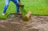 Landscaping Laying New Sod In A Backyard Green Lawn Grass In Rolls poster