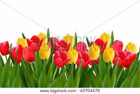 Holiday Background With Colorful Flowers. Vector Illustration.