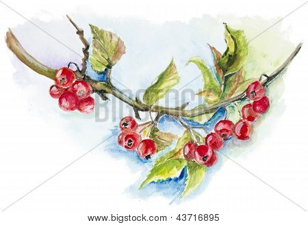 Red Wild Berries