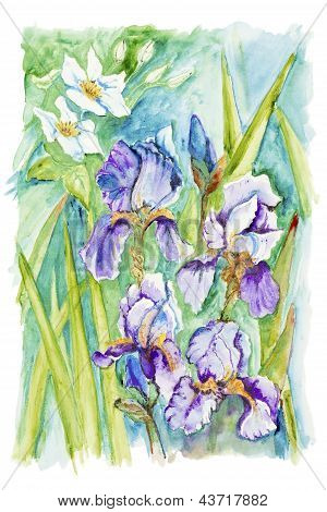 Narcissus And Irises