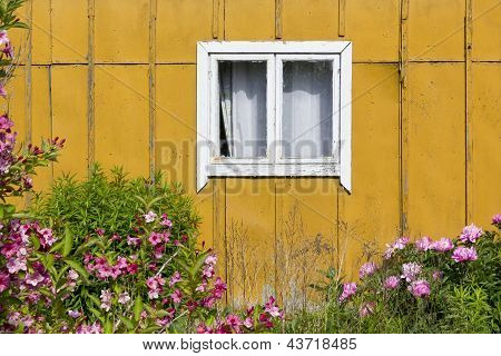 Yellow Wall, Pink Flower