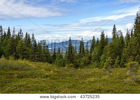 Beautiful Forest Landscape In The Kola Peninsula, Russia