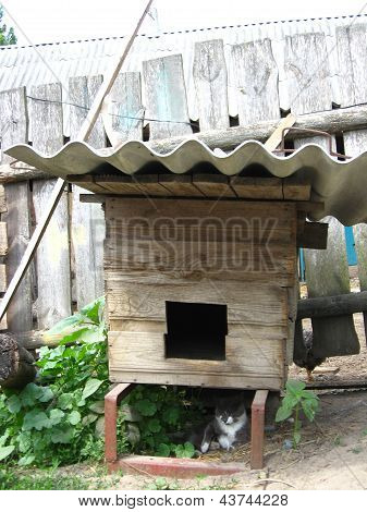 Cat not starting up a dog under kennel