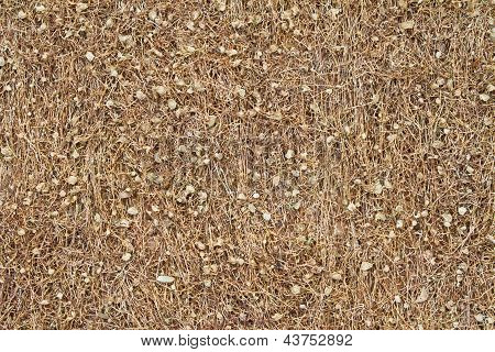 Dried Tobacco Background