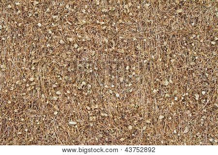 Dried Tobacco Background