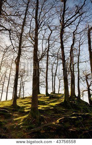 Winter trees on a mossy knoll