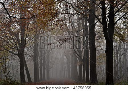 Awl trees in the fog.