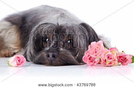 Portrait Of A Decorative Dog With Roses.