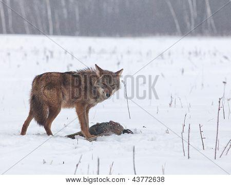 Guardando la presa del Coyote
