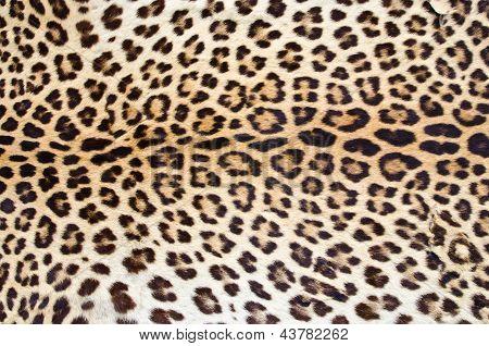 Pelo de leopardo