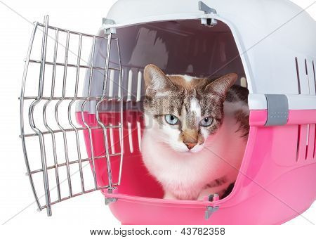 Cute Cat Sitting Home Watching From The Cell. On A White Background.