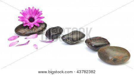 Flower Osteospermum Decoration Concept Of Health Spas. On A White Background.
