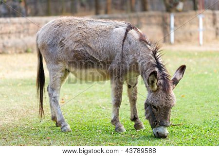 Burro In The Fields