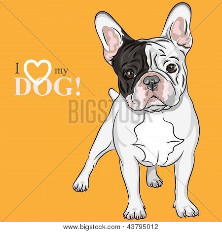 Vector Sketch Domestic Dog French Bulldog Breed