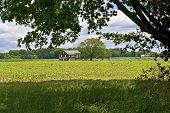 picture of molly  - A shade tree framed view of the historic Molly Pitcher home in Monmouth Battlefield State Park in New Jersey - JPG