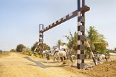 Bullock Carts Approach Unmanned Rail Crossing