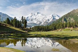 picture of karakoram  - Nanga Parbat reflected in a pond at Fairy Meadows - JPG